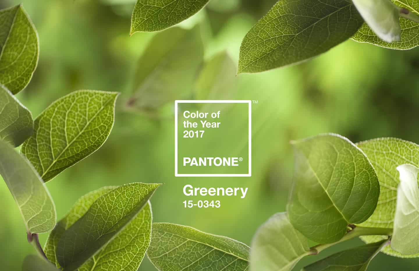 Pantone® Greenery é a cor do ano de 2017 - AcrediteCo